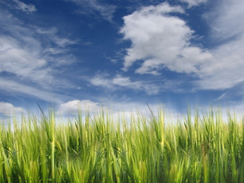green_grass_with_clouds-1024x768